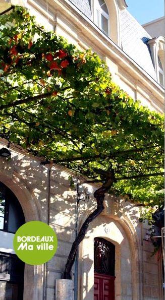 Pied Vigne Victoire - Mairie Bordeaux